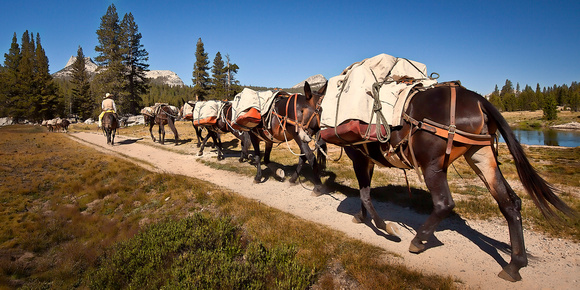Pack Mule Train - Tuolumne Meadows