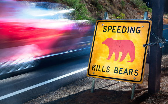 Speeding Kills Bears #1